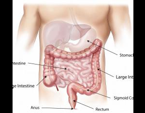 intestinul